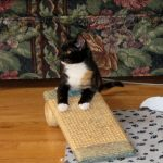 Baby Caly on the scratching pad.