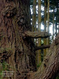 A very happy tree (odd branch)