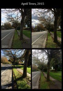 April trees