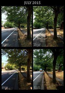 July Trees