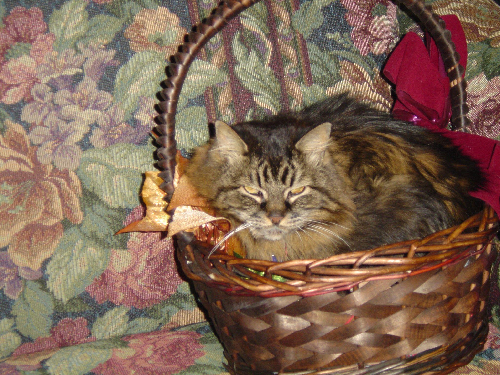 Keeter sitting in a basket.