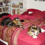 Meerclar, Keeter, and Luna on the bed.
