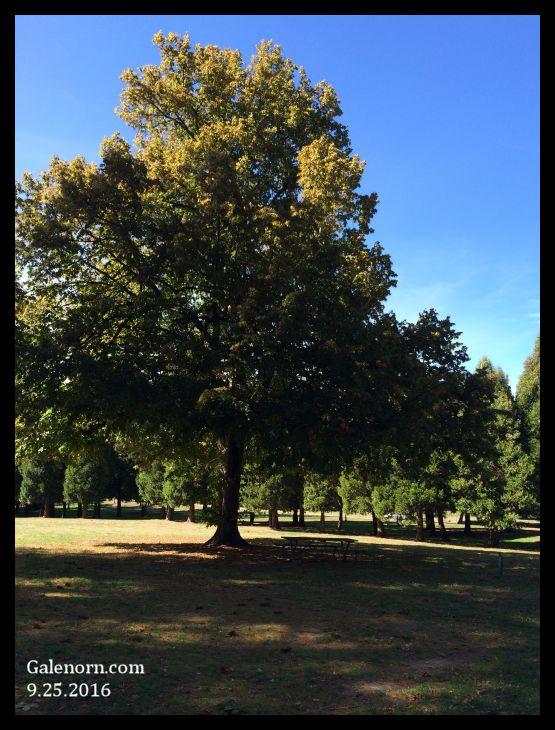 Trees at Marymoor