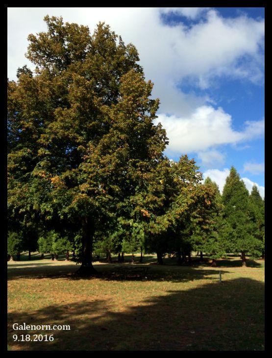 Tree-9.18.2016