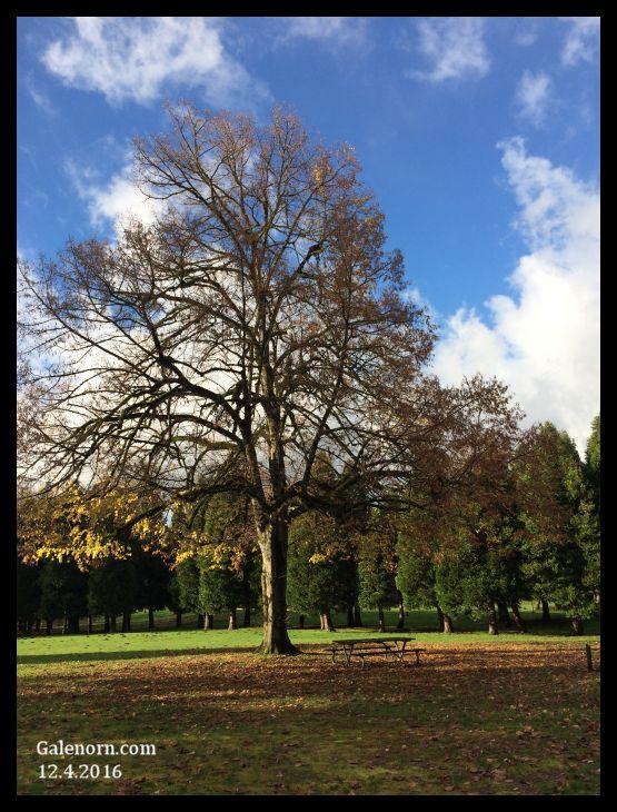 Dec Tree