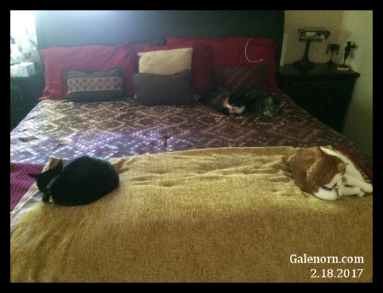 4 cats on the bed