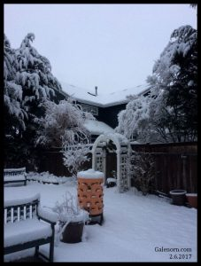 Back yard in snow