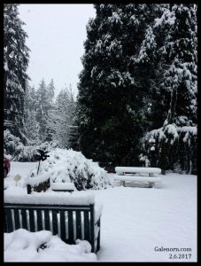snow in our front yard