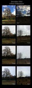 December trees