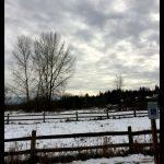 snow on dog park