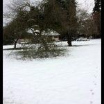 Marymoor park. Tree branch falling.