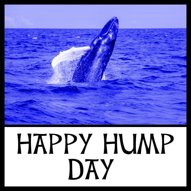 Happy Hump Day humpback whale