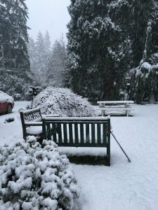 snow in our yard