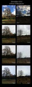 December 2016 Trees
