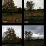 November 2017 Trees