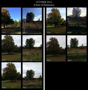 October 2016 Trees