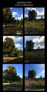 September 2016 Trees
