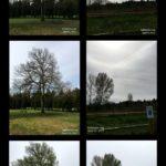 April 2017 Trees