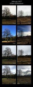 February 2017 Trees