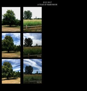 July 2017 Trees