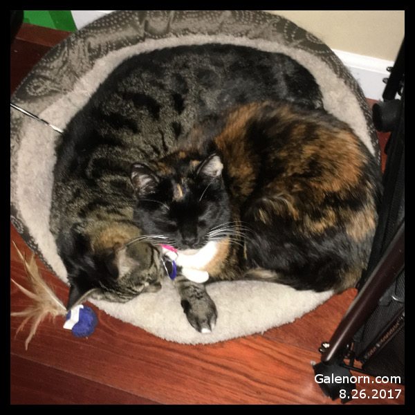 Calye and Morgan sharing a bed