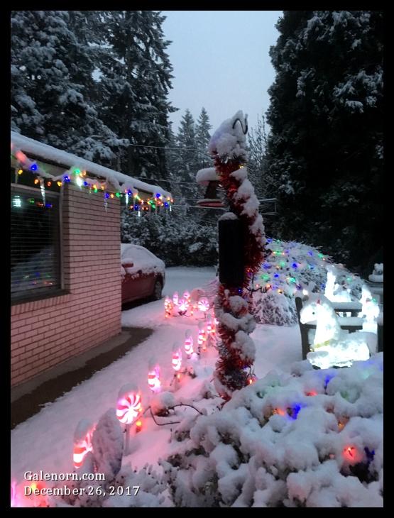 snow in my yard