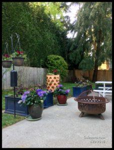 backyard hydrangeas and flowers