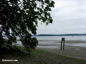 Down on the beach/mud flats
