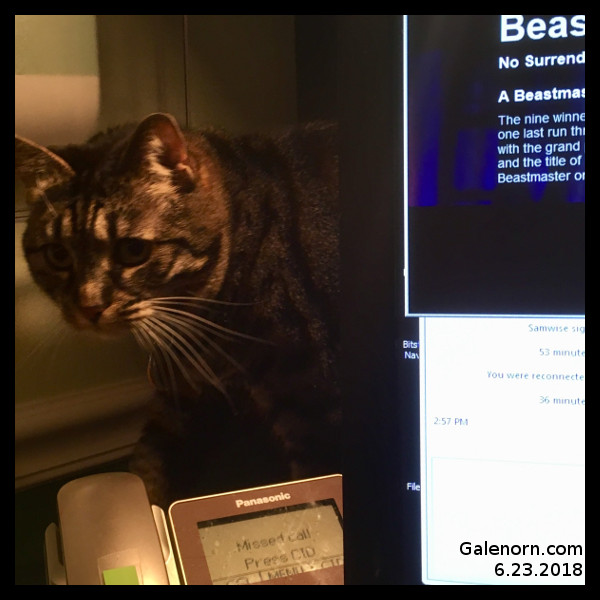 Morgan behind the monitor for Caturday
