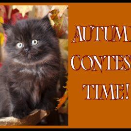Autumn Contest!