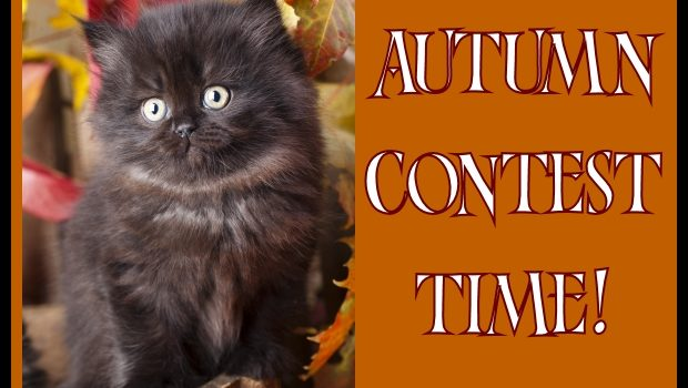 "Little Black Cat says ""AUTUMN CONTEST TIME"""
