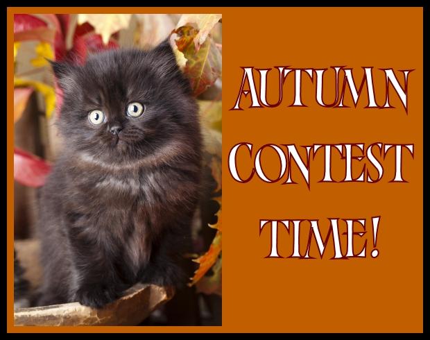 """Little Black Cat says """"AUTUMN CONTEST TIME"""""""