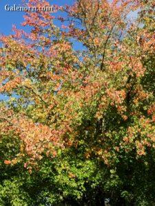 Leaves in mid-turn.