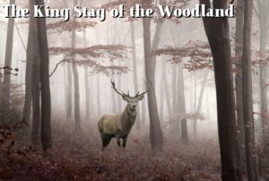 stag in the woodland