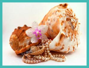 seashells, pearls, orchid