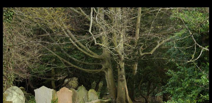 An ancient graveyard.