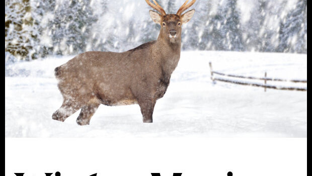 Deer in a snow on winter background.