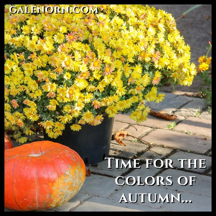 pumpkins near yellow mums