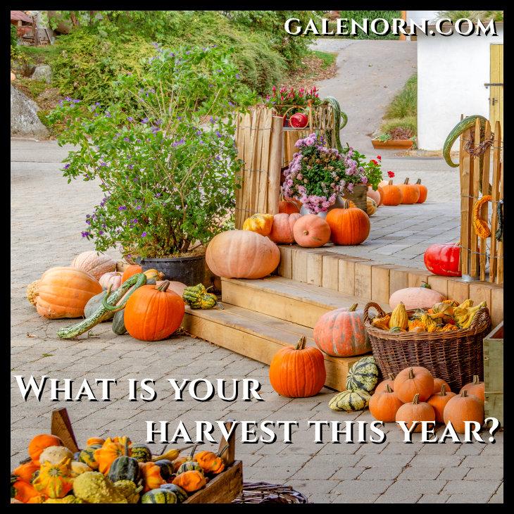 autumnal arrangement of various pumpkins in rustic ambiance