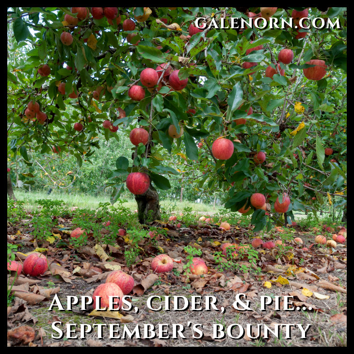 Apple orchard with ripe red apples hanging on trees. Nature background